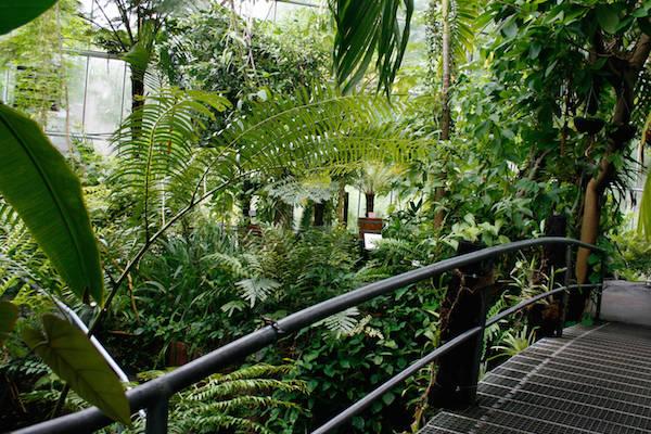 Botanische Tuin Amsterdam : Hortus botanicus amsterdam met euro korting dagjeuitdeal